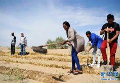 納米比亞科技官員在甘肅學習荒漠化治理的奇特之旅
