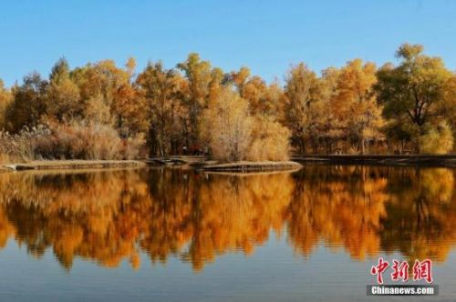 資料圖:甘肅酒泉市金塔沙漠胡楊林景區葉片金黃。楊志彬 攝