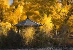 西北旅游必去的金塔胡杨林