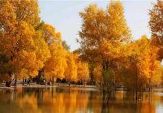国内最美的五大胡杨林观赏地你都去过了吗?
