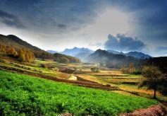 甘肃民乐农家妇女制作出精妙绝伦的麦秆艺术画