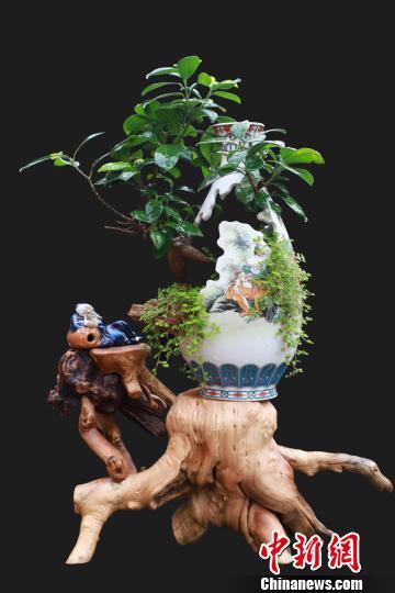 图为何文华制作的精美瓷雕盆景作品。 吴希会 摄