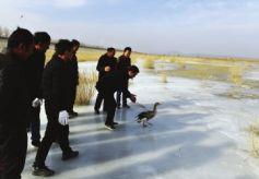 甘肃民勤石羊河国家湿地公园管理局组织开展野生鸟类放飞活动