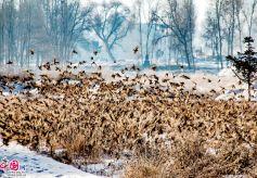 甘肃民乐:寒夜鸟飞回,群山雀欢歌