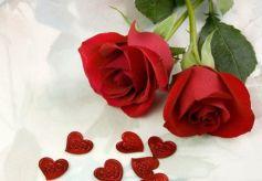 第十二届中国玫瑰之乡·兰州玫瑰节将于5月20日启幕