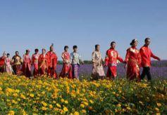 金昌市第五届薰衣草之约集体婚礼将于6月至8月进行