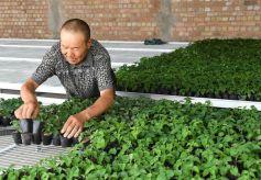 甘肃酒泉:戈壁生态农业奏响增收曲