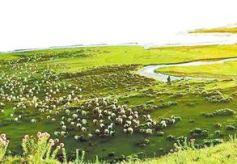 历史上的甘南及青藏东部畜牧业