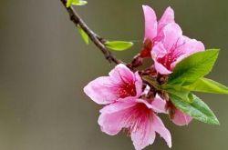 第三屆中國書畫春晚甘肅會場7日將在蘭州舉辦