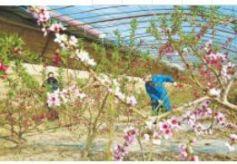张掖山丹县:紧抓春耕农业生产不放松