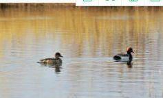 甘肃高台:黑河湿地春潮涌动鸟翻飞