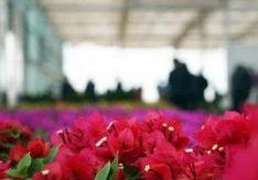 """甘肃榆中以""""花卉造浪漫"""" 塑黄土高原多重""""色域空间"""""""
