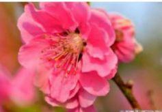 甘肃靖远:春天的色彩