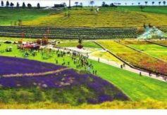 榆中实现文化旅游业和农业融合发展 农业促旅游 旅游带产业