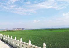 兰州七里河袁家湾村第三届生态文化旅游节昨日开幕
