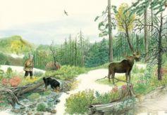 中国图画书《鄂温克的驼鹿》入选2020年度IBBY荣誉榜单
