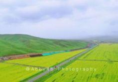 被孤独星球评为亚洲最佳旅行地首位的甘肃,夏天油菜花海开满草原