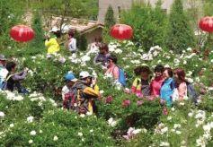 第10届中川牡丹文化旅游节在甘肃兰州新区开幕