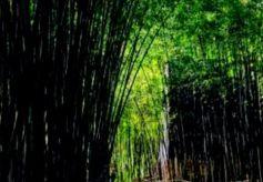 """""""十四五""""时期甘南州将建设生态文明小康村1430个"""