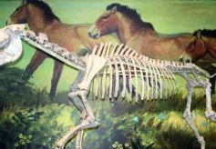 探访甘肃和政古动物化石博物馆