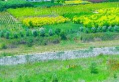 西峰显胜乡毛寺村:生态带动乡村旅游升级