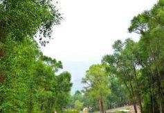甘肃张掖:夏日西柳沟生态美景引游客