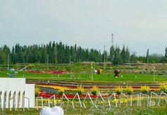 甘肃省张掖市 平原堡五彩田园景观助推乡村旅游!