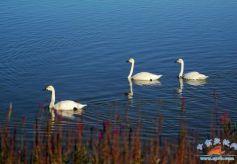 担好上游责任 展现上游作为我市黄河流域生态治理成效显现