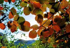 甘肃醉美的秋景,就藏在陇南这座小城!